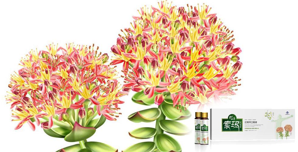 索玛红景天植物饮料罐型包装设计