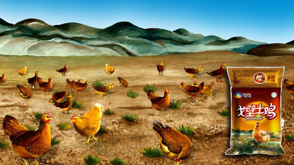 甘肃天玛生态 生态鸡肉食品包装设计